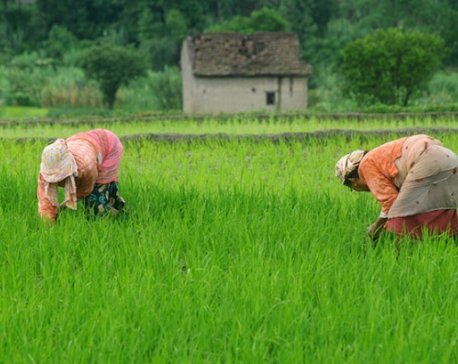 Govt starting Rs 500m 'Youth in Agriculture' program from December