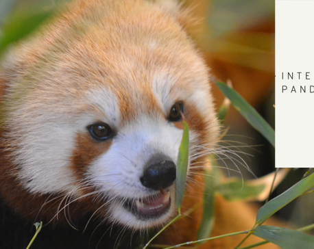 Red Alert to Save the First Panda