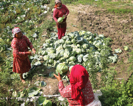 'Ktm Valley consumes 40% of all vegetables produced in the country'