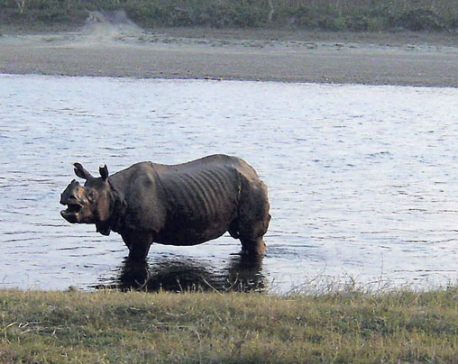 Rescued rhino released into CNP