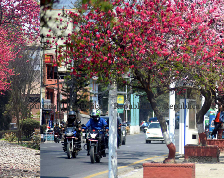 IN PICS: Spring calling, Cherry blossoms in full bloom