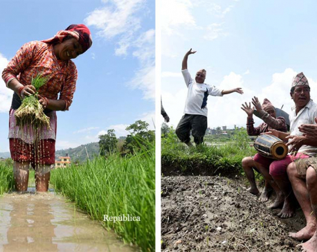 PHOTOS: Paddy planting season begins !