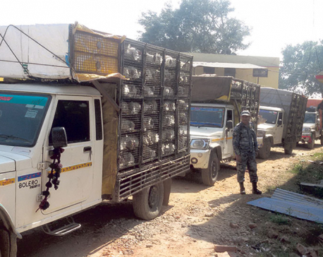 Smuggling of Indian chicken rife in Siraha