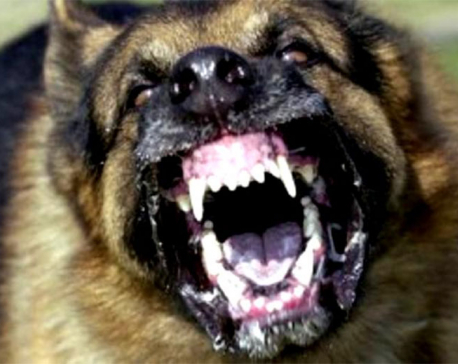 7 injured after rabid dog attacks them