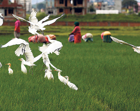 Witnessing bird migration in Nepal