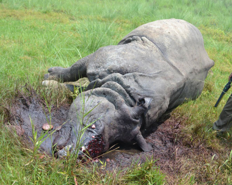 Rhino killing challenges CNP's security mechanism