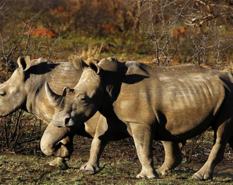 South Africa slowly turning tide against rhino poaching, says minister