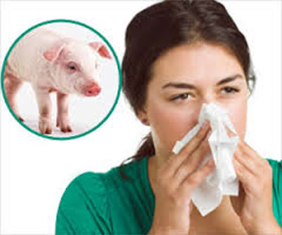 Two die of swine flu in Jhapa