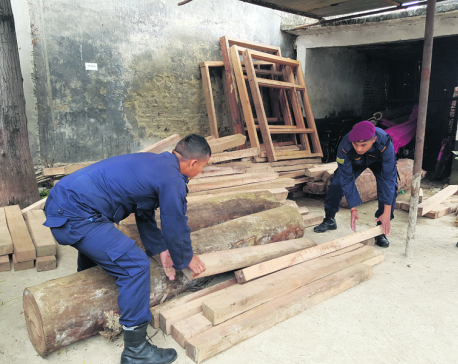 Timber smuggling goes unchecked in Banke