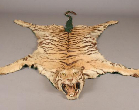Man held in possession of tiger's hide and bones
