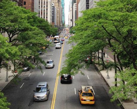 Trees make cities healthier