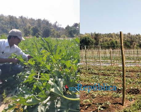 Lockdown creating opportunity for vegetable farmers in Karnali