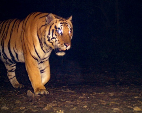 When it comes to tiger conservation, we must consider the unexpected