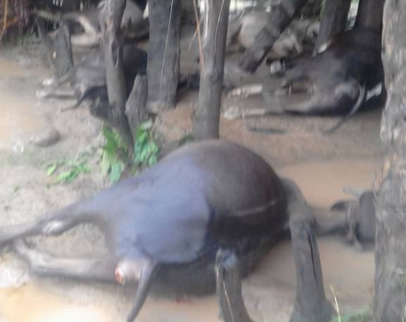 24 domesticated animals killed, 35 houses damaged as flood hit village