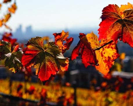 On autumn glory