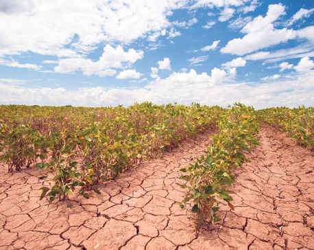 Climate Smart Agriculture: Context and Priorities