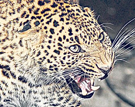 Leopard attacks kill 11 children in 5 years