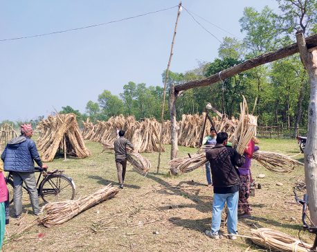 Bamboo becomes source of income for locals of Tikapur
