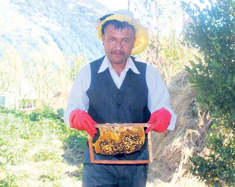 Beekeeping works wonders for Myagdi farmer