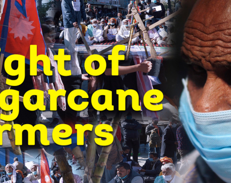 VIDEO STORY: Plight of sugarcane farmers: Mill owners can't be traced, govt can't be trusted