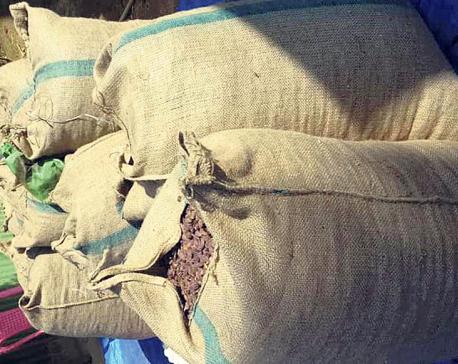 Low big cardamom prices worry farmers