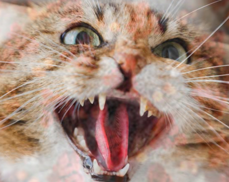 Coronavirus infection found in cat for the first time in South Korea