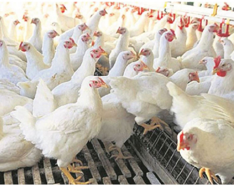 Poultry sector hit hard