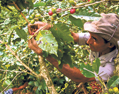 ITC to inject $9 million to promote export of pashmina, coffee