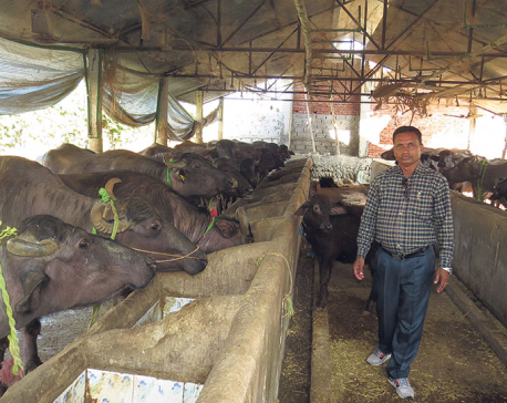 A profitable switch:  From cow farming to buffaloes
