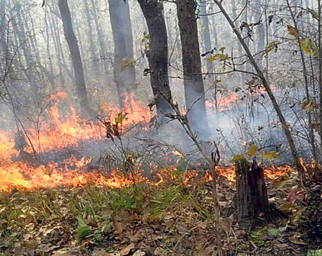 Fire destroys thousands of hectares of forest