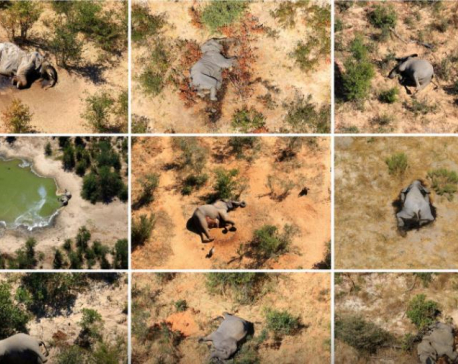 Botswana says toxins in water cause of mysterious elephant deaths