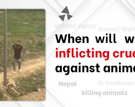 Animals are killed brutally time and again, but perpetrators are hardly booked