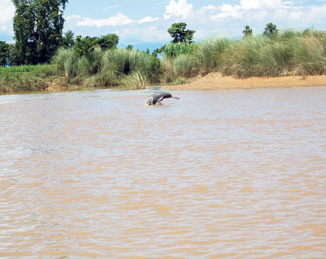 Water pollution a big threat to aquatic life in Tikapur
