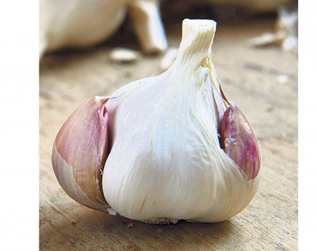 Dry garlic skyrockets to Rs 560 a kilo as import from China stops