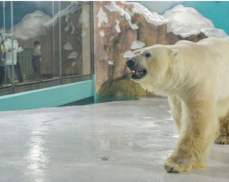 Chinese 'polar bear hotel' opens to full bookings, criticism
