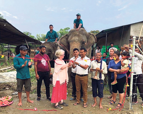 Privately owned elephants freed from shackles