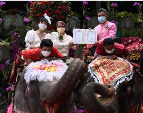 Couples in Thailand tie the knot on elephants on Valentine's Day