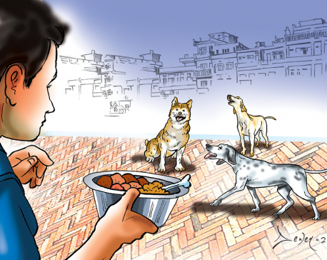 Ensuring Welfare of Street Dogs