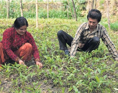 Farming families