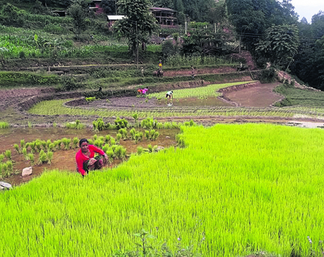 Farmers busy planting despite election fever