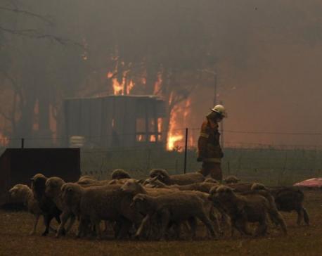 2 firefighters die, 3 hurt as wildfires ravage Australia