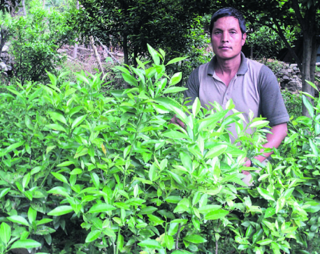 After disappointing jobs abroad, migrant workers find orange farming at home more profitable