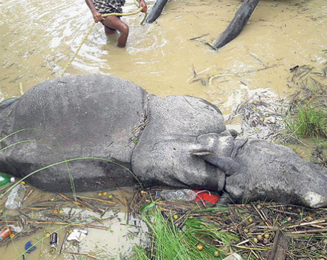 Rhino, tiger found dead in Chitwan National Park area