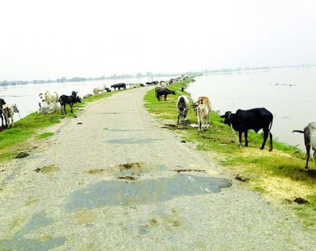 Flood victims in Kailali spending nights on Postal Highway