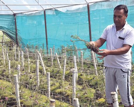 Flood wreaks havoc on major flower farm of Kavre