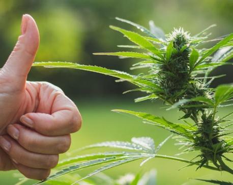 Why marijuana should be legalized