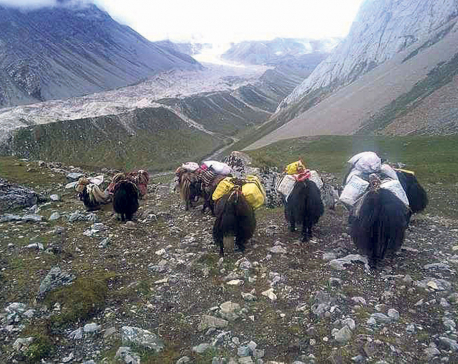 Gorkha locals head to Tibet to buy food stuff