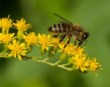 Scientists, researches confirm pesticides harm the bees
