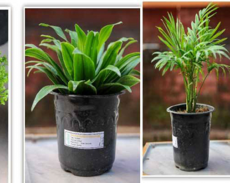 How not to kill your indoor plants