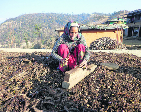 'Massive destruction of herbs, wildlife in Jajarkot'